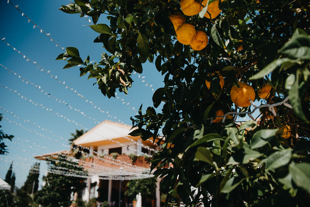 Patio naranjos Hacienda La Masia
